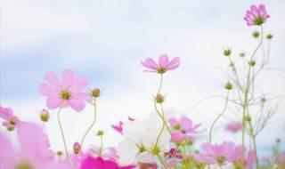 人の行く裏に道あり花の山