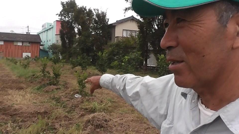 柴尾喜博さんのみかん畑視察