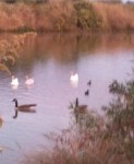 A few of the birds at the Riparian.