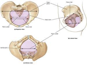 pelvis inlet outlet