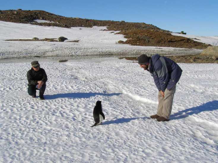 antarcticasummer