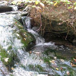 Peterson Creek Park 29