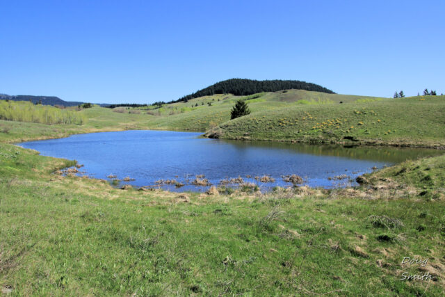 Lac Du Bois Hills in May