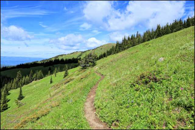 Tod Mountain in July – Kamloops Trails