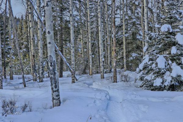 Bush Lake Loop - Kamloops Trails