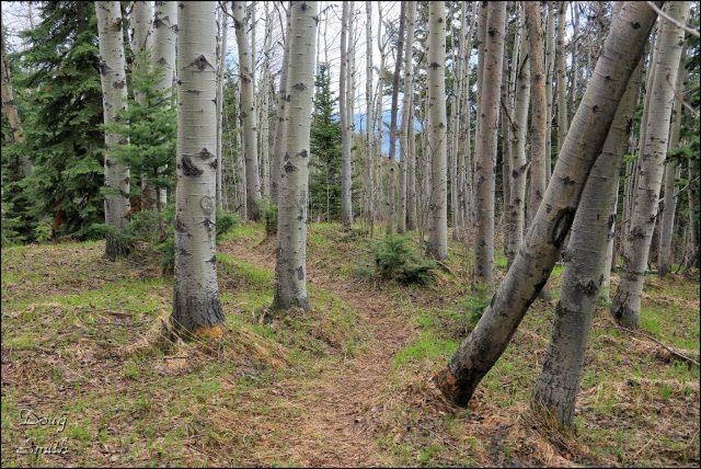 On the Embleton Trails – Kamloops Trails