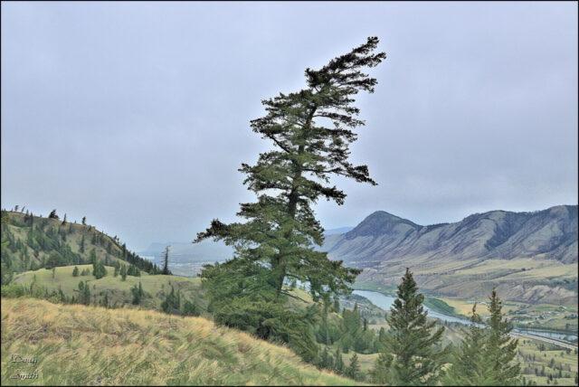 Sunrise Mountain Ramble – Kamloops Trails