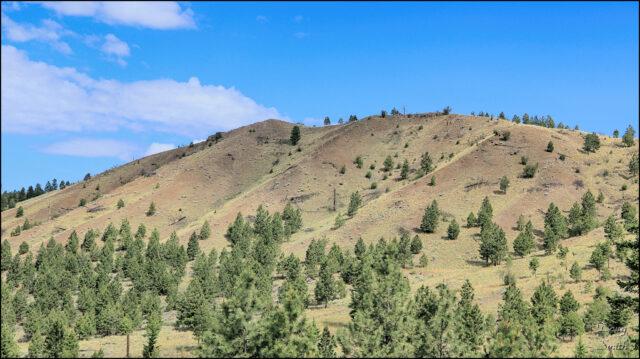 Big Pine Nature Hike – Kamloops Trails