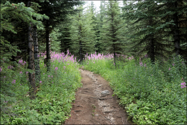 Trophy Mountain Rim – Kamloops Trails