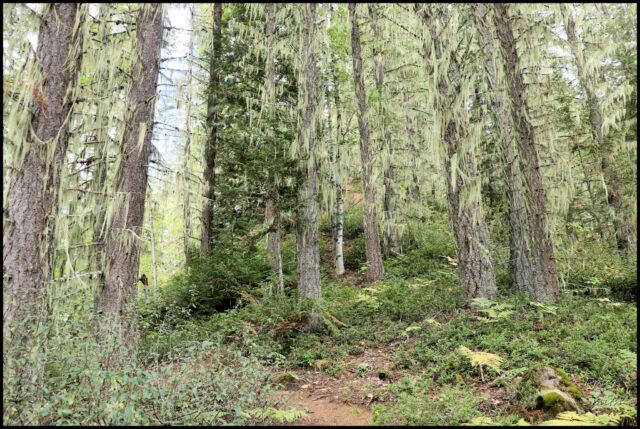 Osprey Lookout Trail – Kamloops Trails