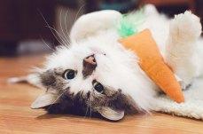 kamoorephotography cat photo