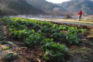 南伊豆農業