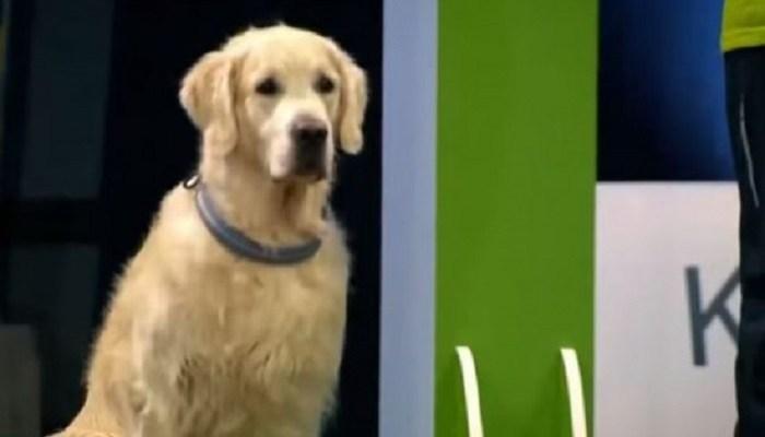 ο πιο έξυπνος σκύλος