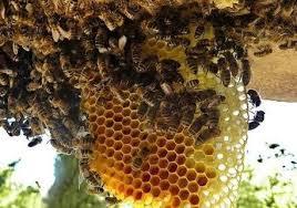Jadilah Umpama Lebah