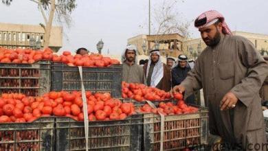 Photo of وزارة الزراعة تمنع استيراد محصول الطماطة لوفرته المحلية