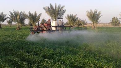 Photo of زراعة كربلاء تبدأ بحملة مجانية لمكافحة الأدغال العريضة والرفيعة الأوراق في حقول الحنطة