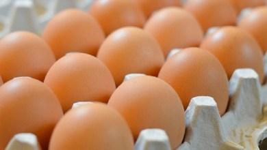 Photo of زراعة كربلاء: إنتاج أكثر من (11) مليون بيضة من مشاريع بيض المائدة في المحافظة