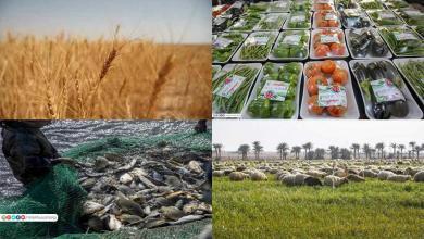 Photo of مزارع العتبة الحسينية تواصل دعمها للمنتج الوطني