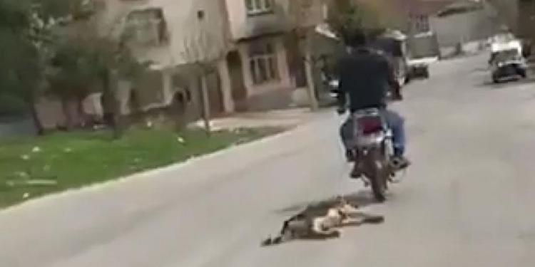 Motosikletin arkasına bağladığı köpeği sürükledi