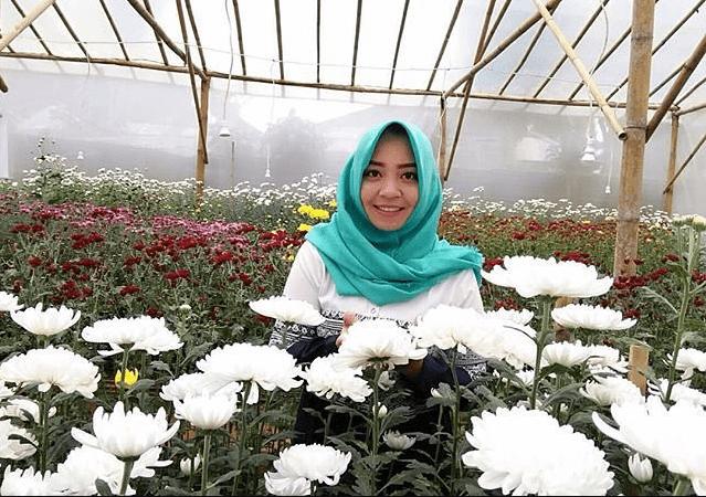 taman bunga krisan