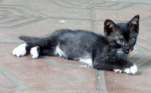 kucing-mbah6