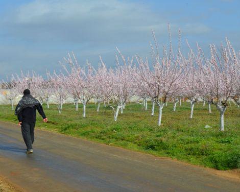 Зимското прскање на овошните дрвца да се изврши најкасно до 15 март -порачуваат агроекспертите