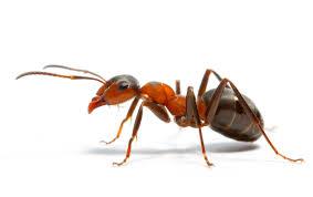 Интересни факти за мравките