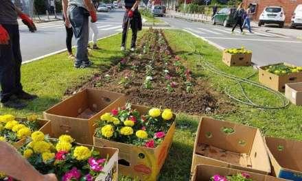 ЈП Комуналец ги обновува цветните површини низ градот