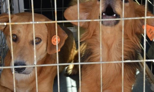 Општина Струмица го осудува труењето на кучињата и ги охрабрува надлежните да ги казнат сторителите