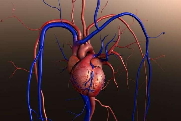 Вечерва ќе се направи првата трансплантација на срце во земјата