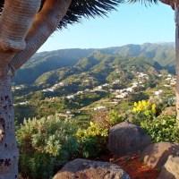 Drachenbäume von Puntallana