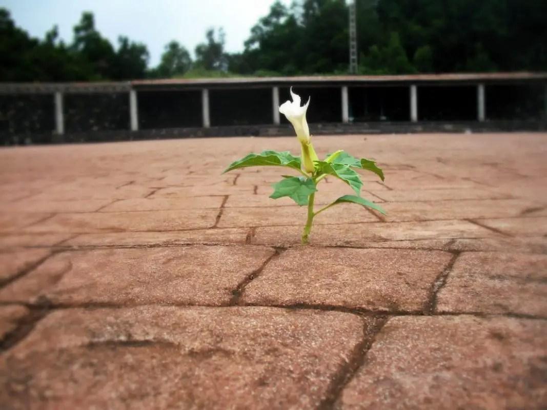 Blume - Naturkraft