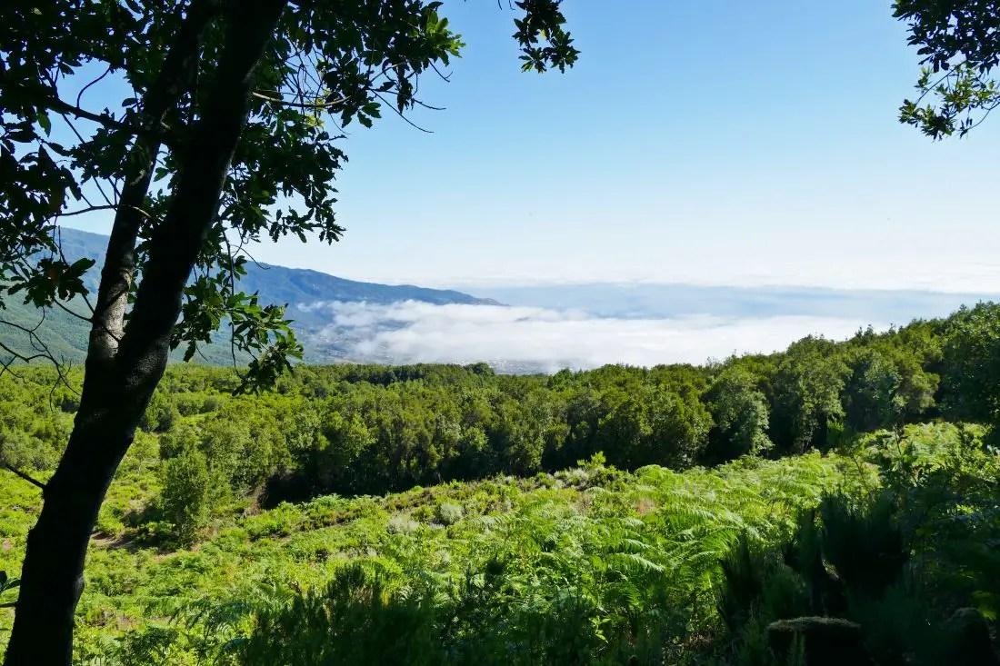 Berg- und Waldlandschaft