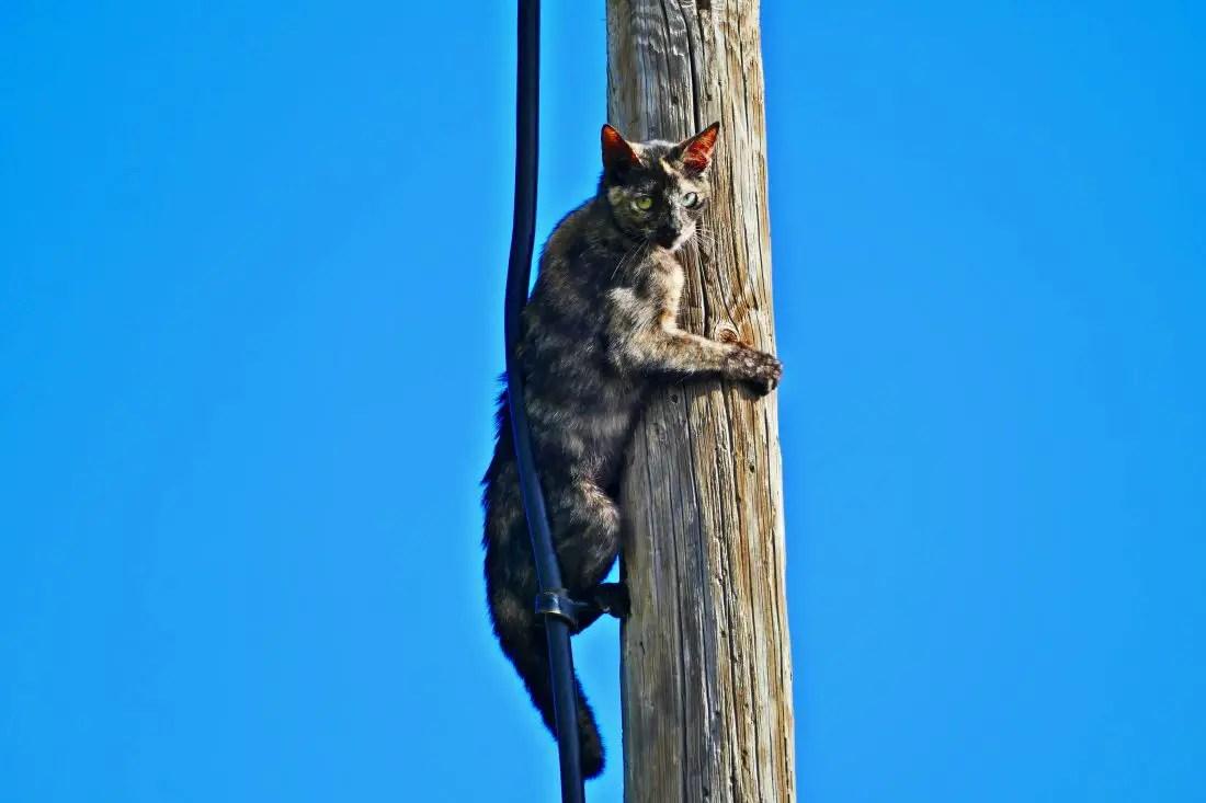 Katze - Ausblick