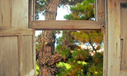 Fenster zurNatur