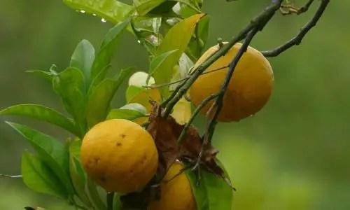 Orangenzeit