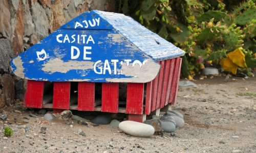 Casita de Gatos