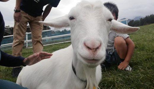 無料でヤギと触れ合える?山梨県立まきば公園で遊んできました