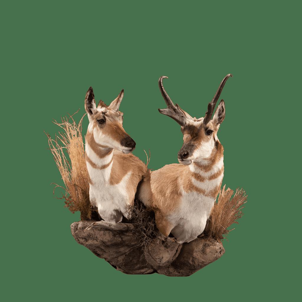 Antelope wall pedestal