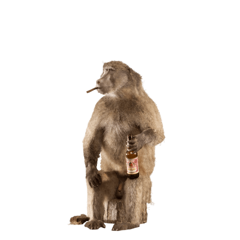 smoking baboon with bottle