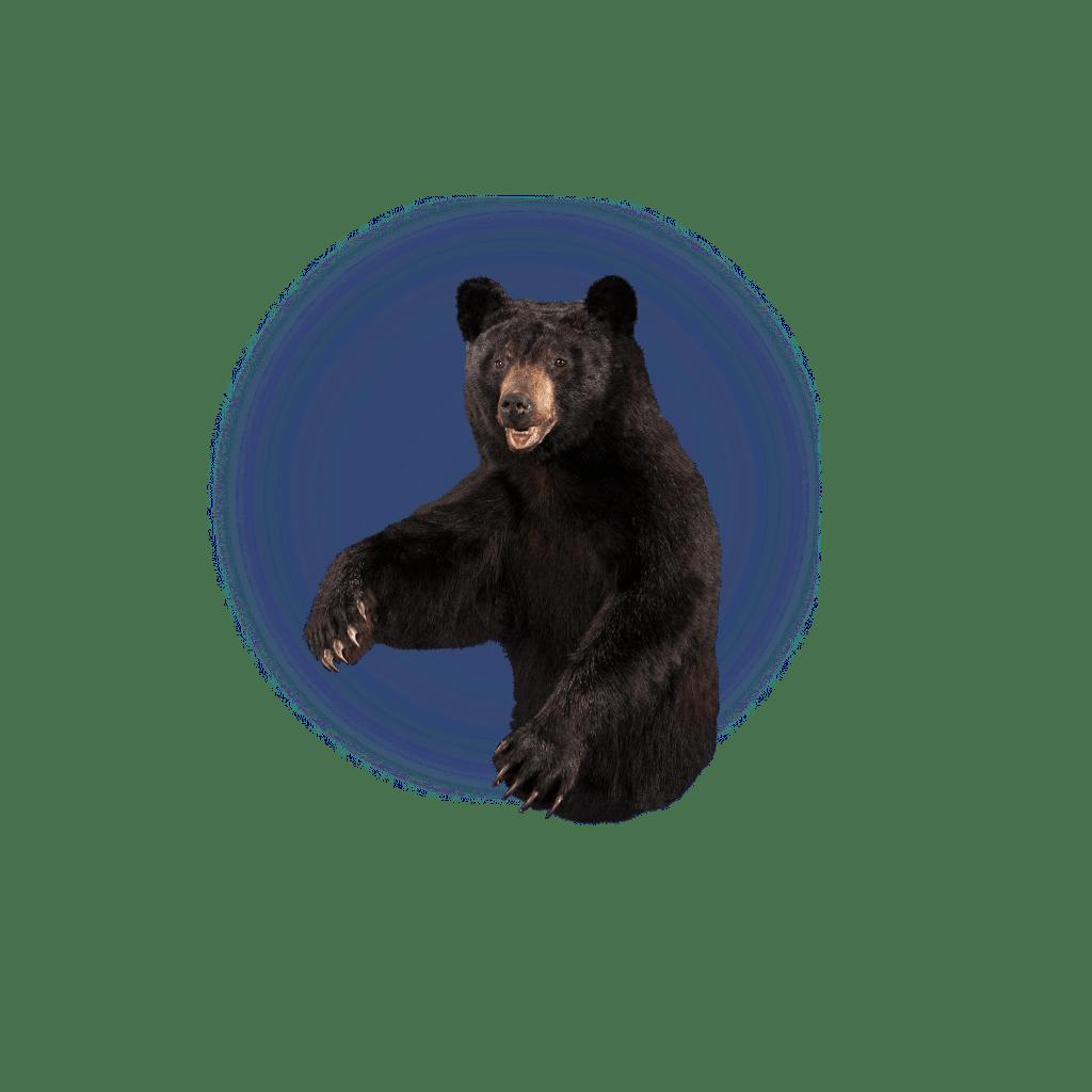 black bear half size mount