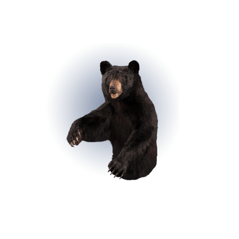 black bear half size mount