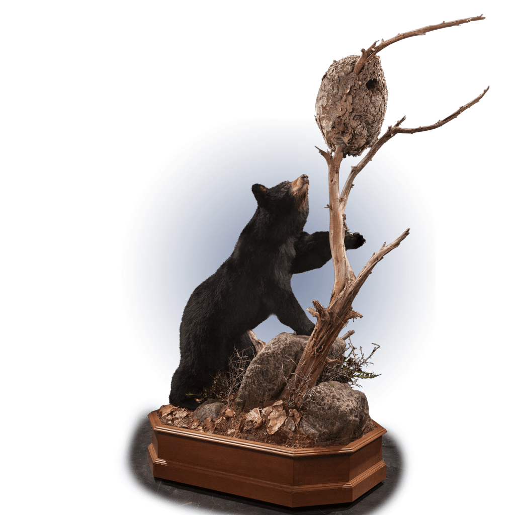 black bear climbing tree pose