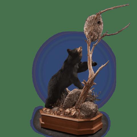black bear climbing tree pose
