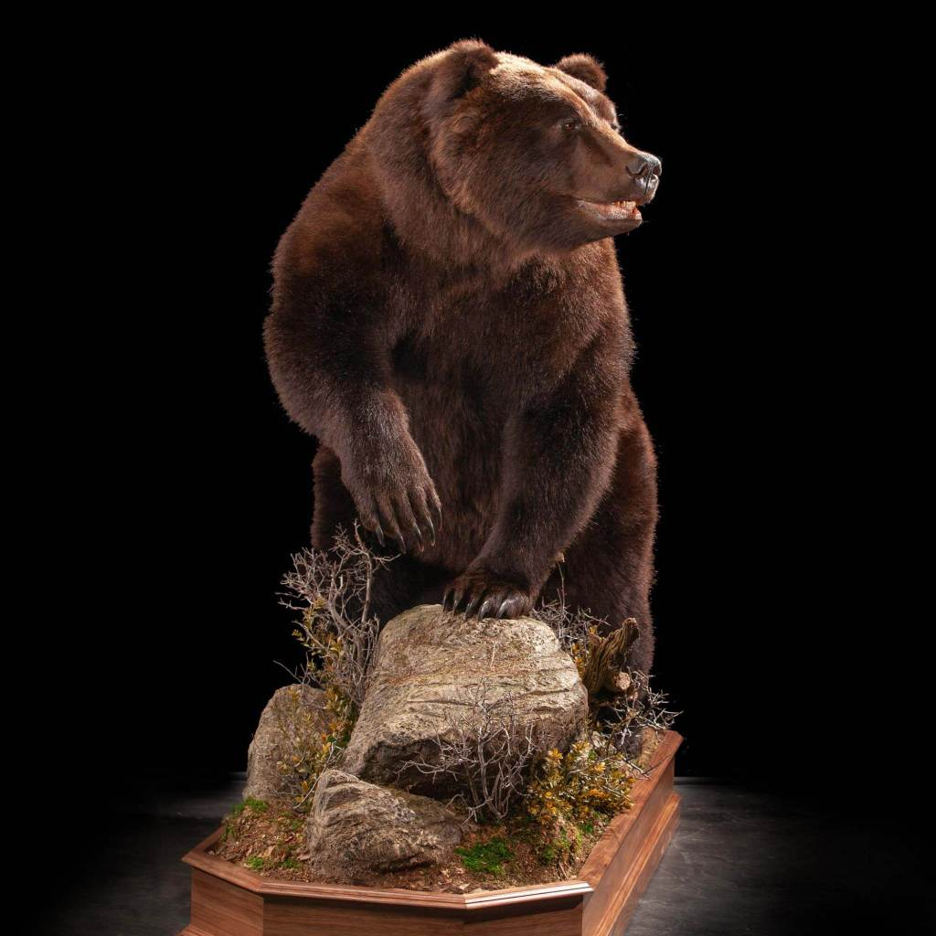 taxidermy mount side view