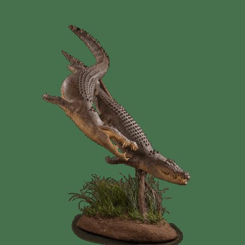 two crocodiles full size mount