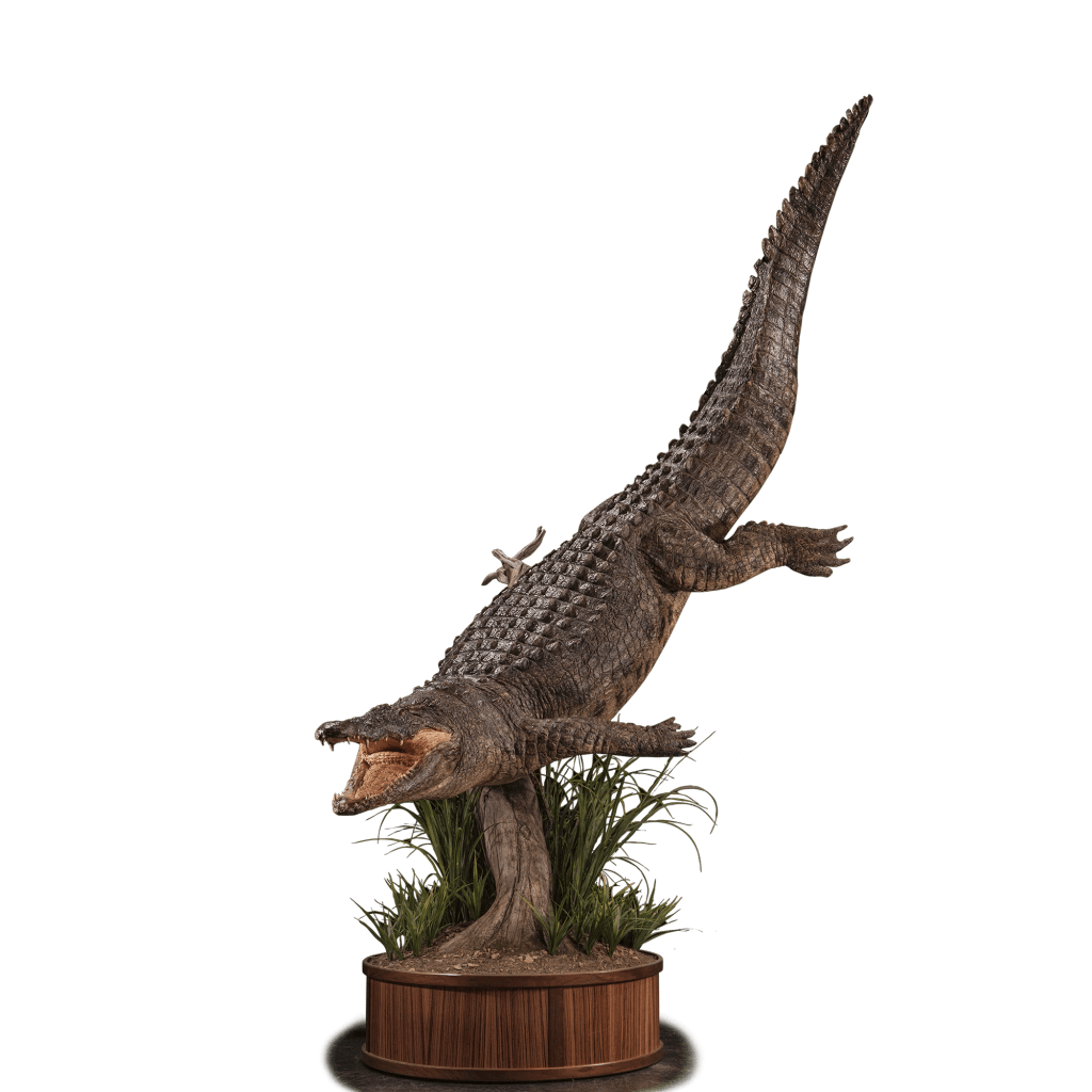 crocodile full size mount