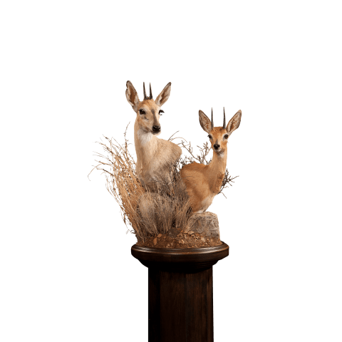 duiker pedestal mount