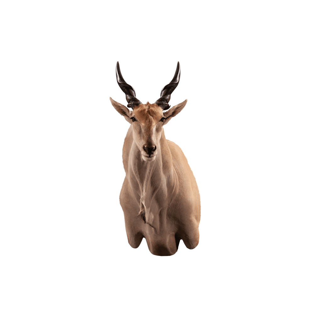 eland shoulder mount