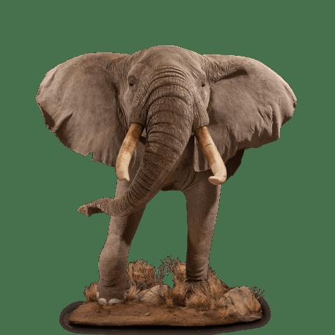 elephant half-size mount